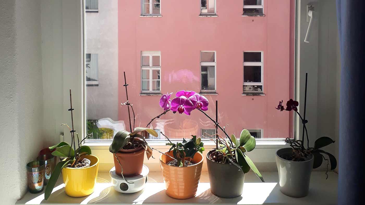Arbeiten allein Haus. Bericht aus dem Home Office von Sarah Rüger
